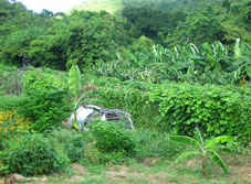 Creque Dam Farm, home of the Virgin Islands Sustainable Farm Institute.